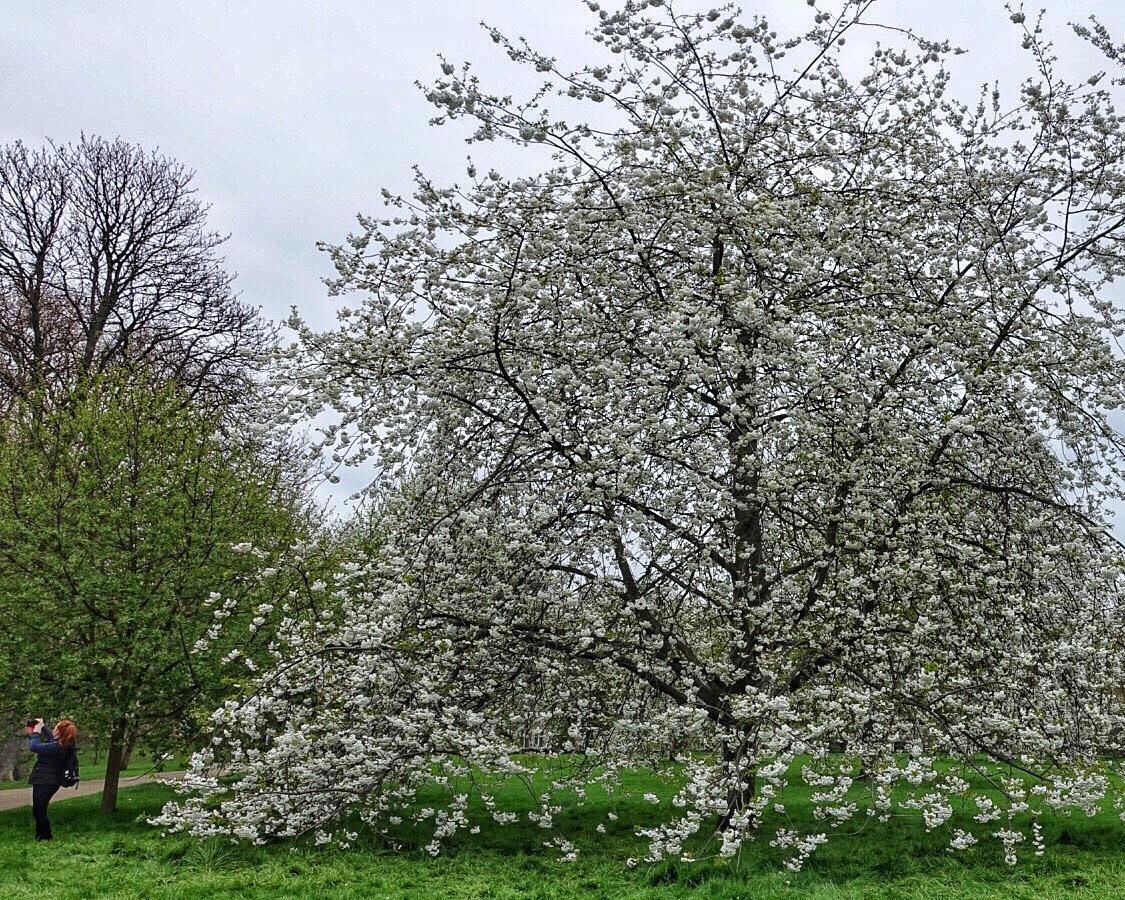 Frühling und schläfrige Politik